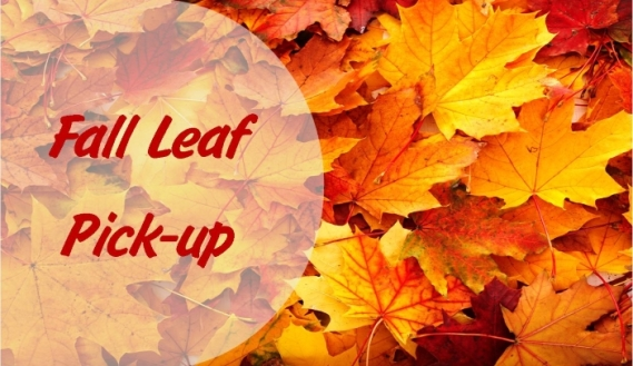 Leaf Pick up Image
